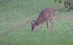 """6 Whitetail Hunting """"Fast Facts"""""""