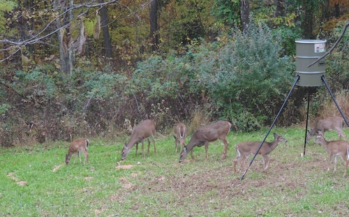 When legal, many outfitters use bait/feeders near deer stands. If you dislike hunting over bait, choose an outfitter that doesn't bait.