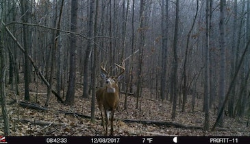 Does Human Urine Spook Whitetails?