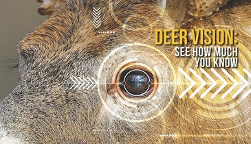 A Deer's Vision: It's Not About Color