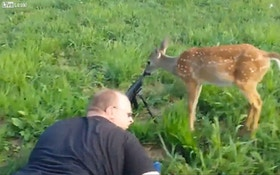 VIDEO: Deer stays calm and licks a rifle muzzle