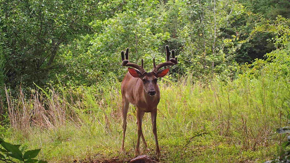 More Than 500 Deer Euthanized Over Disease Fears