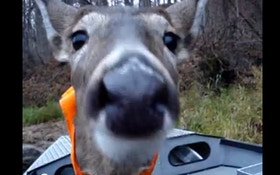 VIDEO: Deer wearing orange hunting vest hops on a boat