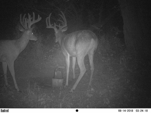 Game cameras showed great bucks, but a landowner who pulled the lease at the last minute turned excitement into a disaster.