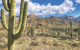 Desert Pursuit: Bowhunting Coues and Mule Deer