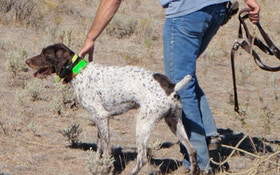 Test Your Knowledge On These Hunting Dog Terms