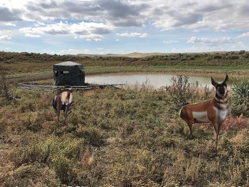 Montana Decoys were used to entice pronghorns into crossbow range for the author.