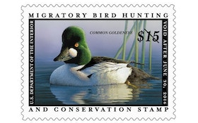 Duck stamp price may climb higher