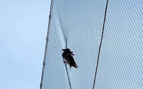 Stuck Duck Rescued From Backstop Netting