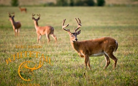 Early Season Deer Hunting Tips