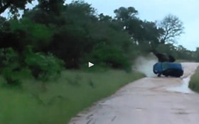 VIDEO: Elephant rolls tourist's car