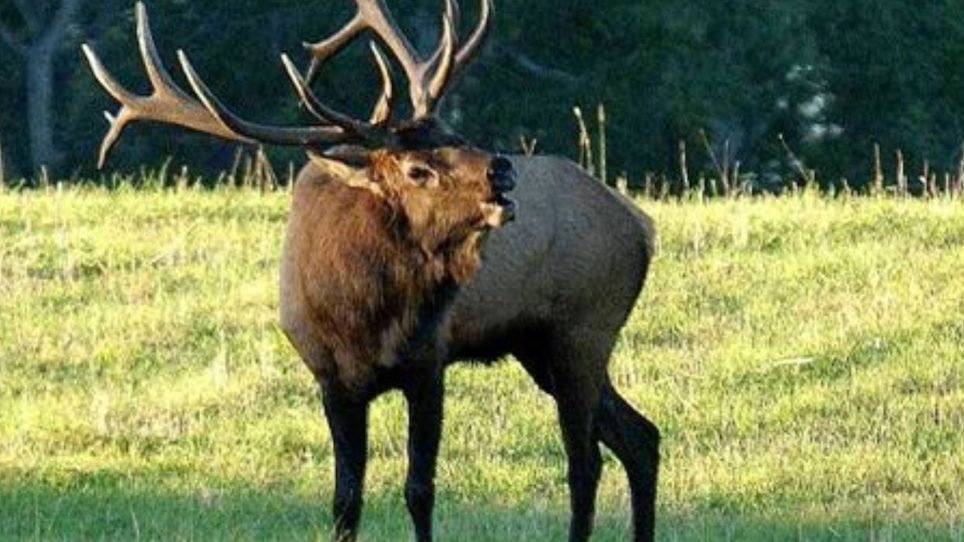 Small Tract Part of Larger Puzzle for Elk Habitat Restoration