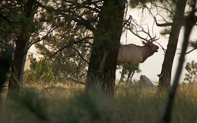 Montana Wildlife Managers Make Progress On Elk Brucellosis