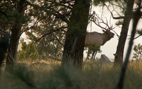 Bob Robb's 7 Proven Tips For Bowhunting Elk