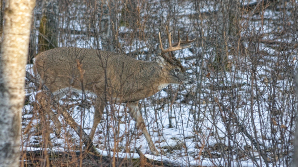 Recipes For Bowhunting Success During The Rut