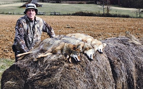 From the Readers: Calling southern coyotes