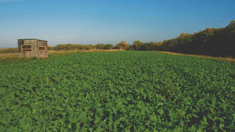 Reality Check: Are Food Plots Worth the Time, Effort and Money?