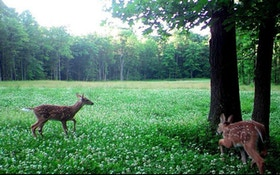 Managing for Whitetails: Don't Forget About Fawns