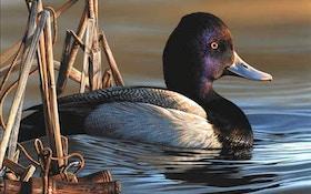 Delaware Artist Wins Federal Duck Stamp Art Contest