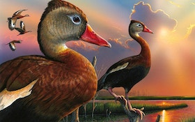 Op-Ed: Buying Duck Stamps Online for Hunting Season