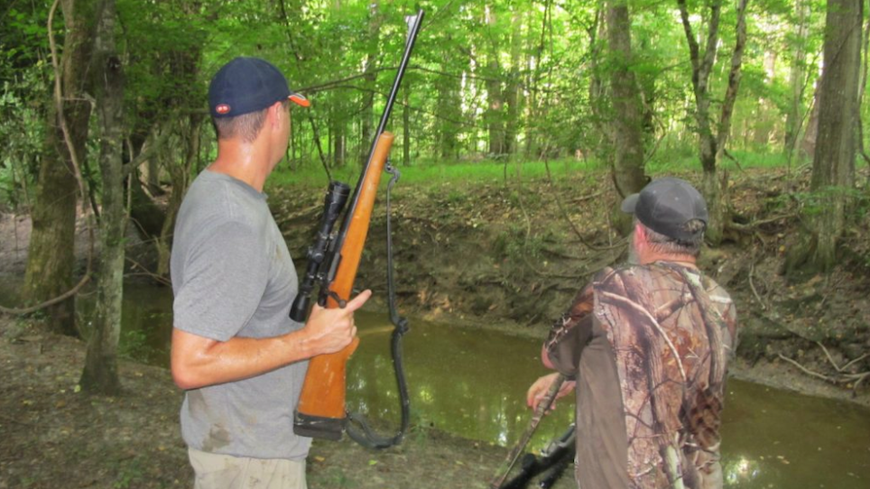 Where to Find, Hunt Feral Pigs in Summer