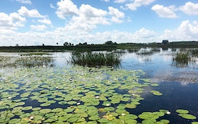 Florida Seeks Ideas for Aquatic Plant Management
