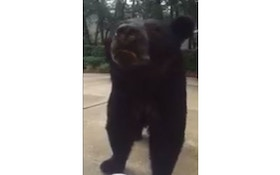 VIDEO: Bear Gets Up Close And Personal In Driveway