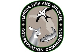 Amid Outcry, Fla. Says Short Bear Hunt Season Ran Smoothly