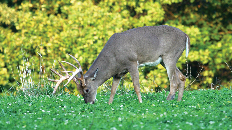 Hold Deer on Your Property by Planting Food Plots for Each Season