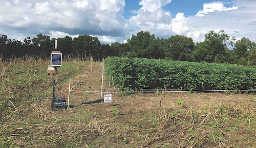 Many land managers will utilize an electric fence to keep deer out of their plots until they can grow large enough to sustain the heavy browsing pressure. Notice the beans outside of the fence are browsed to the ground compared to the plants inside the fence.