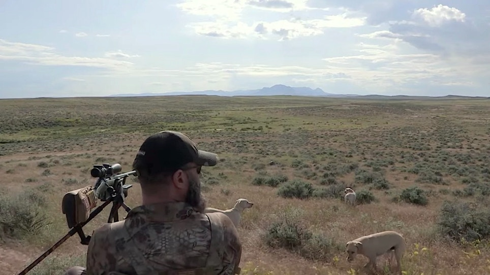 Hunting Coyotes With Dogs in Big Sky Country