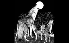 Coyotes Prowling Southern Mississippi For Domestic Pets