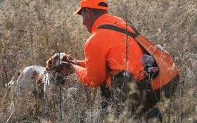 The Best Shotguns, Chokes And Loads For Hunting Quail