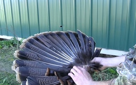 How To Remove A Wild Turkey Fan And Beard