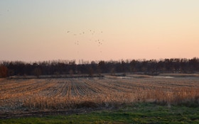 The 4 Best Things In Waterfowl Conservation In The Last 10 Years