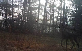 Where to hang trail cameras in the early deer season