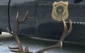 Michigan DNR Seeks Tips About Poached Bull Elk