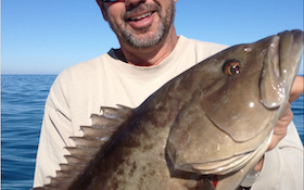 Gag Grouper Season Open in Certain Florida Counties