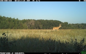 Get a Leg Up on Early Season Whitetails
