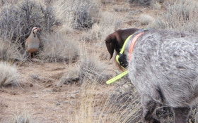 Hunting dog development and training—we are the key