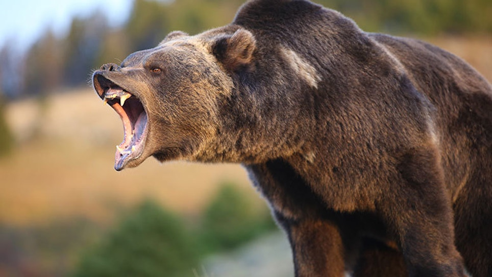 Wyoming Governor Defies Federal ESA, Signs Bill Authorizing Grizzly Bear Hunting