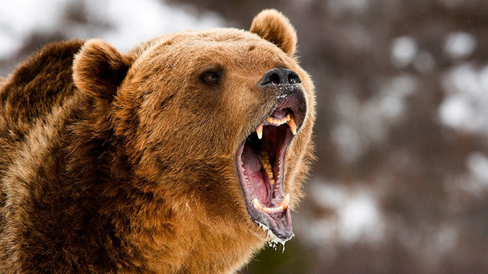 Elk Hunter Survives Savage Attack From Grizzly Bear