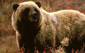 Idaho Fish & Game Approves 2018 Grizzly Bear Hunt