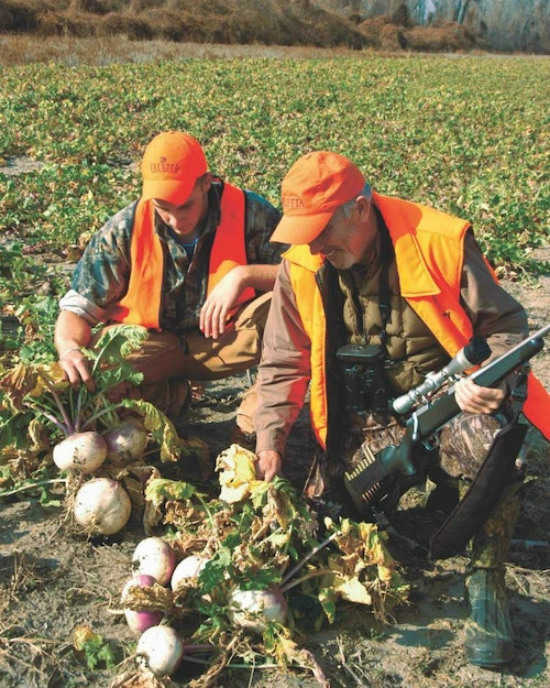 One of the author's favorite food plot blends is Big 'N Beasty Brassicas from Frigid Forage. In Iowa, he broadcasts the seed during late summer. Whitetails love eating the green tops and the bulbs.