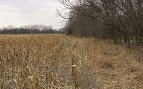 Habitat Transitions for Big Whitetail Bucks