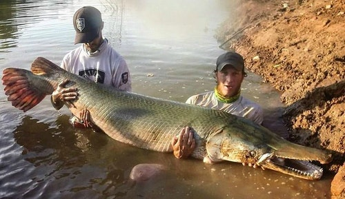 Henry Martin (right) is one of the top alligator gar guides in North America. His office is a muddy jon boat on the Trinity River in southeast Texas.