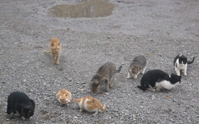 Should We Hunt Feral Cats?