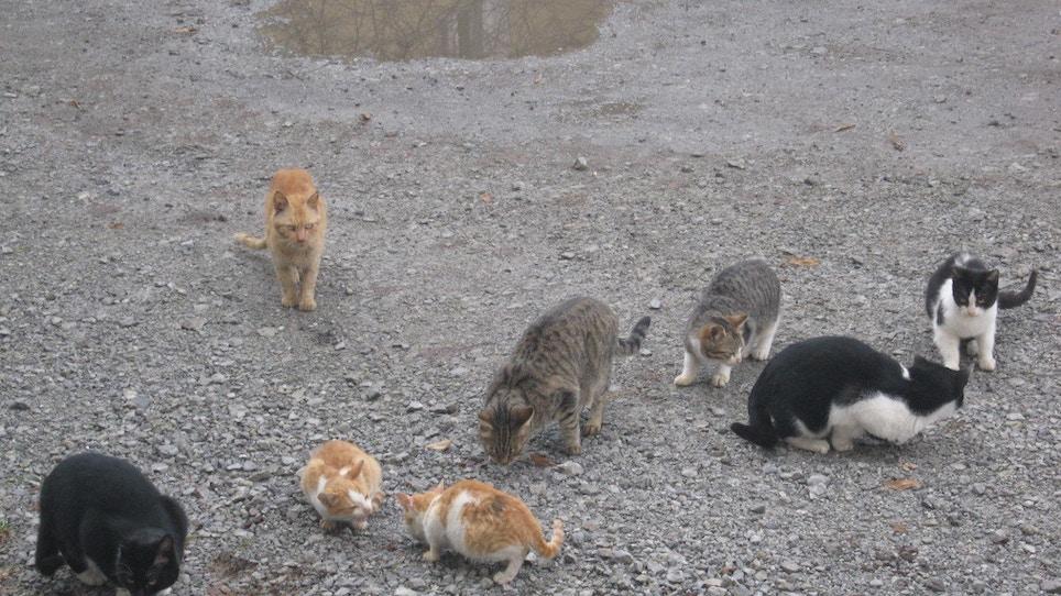 Should We Hunt Feral Cats?