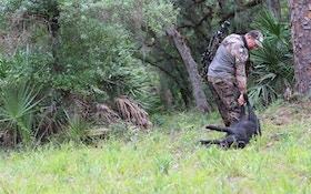 Daytime Hog Hunting Tips