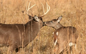New Study Reveals How Whitetails React to Hunting Pressure